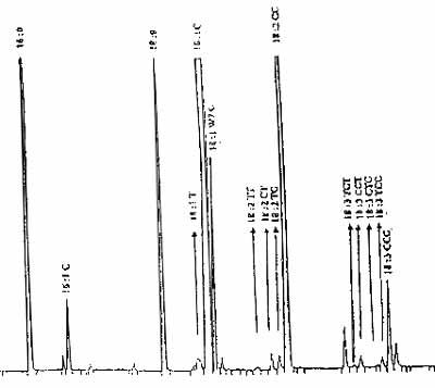 Gascromatogramma tipo relativo alla determinazione degli isomeri trans degli acidi con colonna capillare