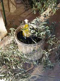 Cesto di olive del Lago di Garda